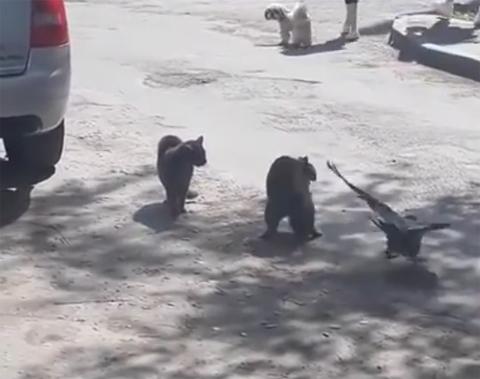 catfight+crow6