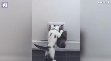 catflap+dogvskitten4