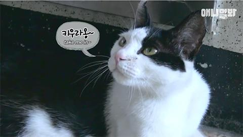 happystalkercatkorea1