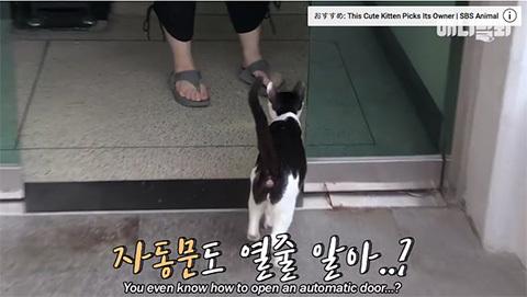 happystalkercatkorea2