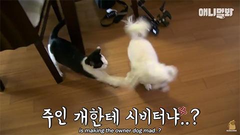 happystalkercatkorea5