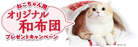 kaisekiwabuton_present_mv
