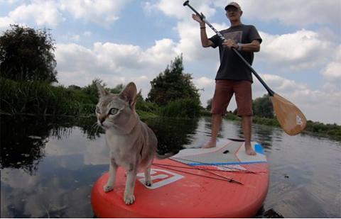 paddleboardingcatNoodle1