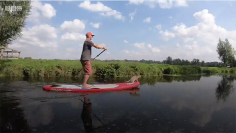 paddleboardingcatNoodle2