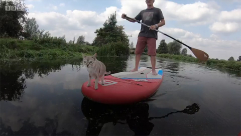 paddleboardingcatNoodle5