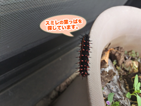 tsumaguro1_091618