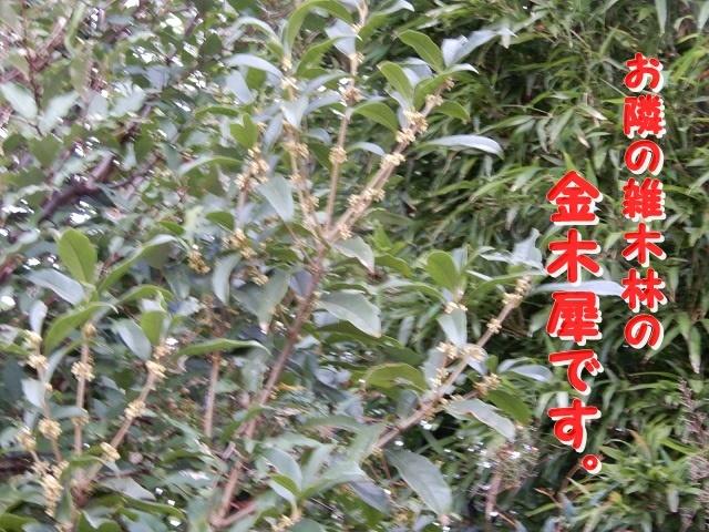 DSCN8837.jpg