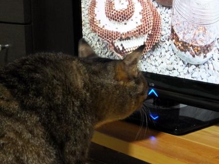 テレビは離れて2