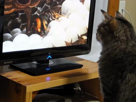 テレビは離れて3
