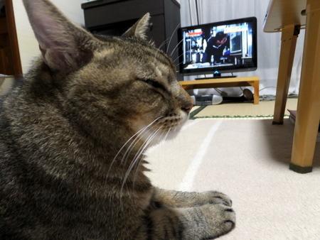テレビは離れて6