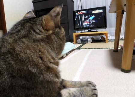 テレビは離れて7