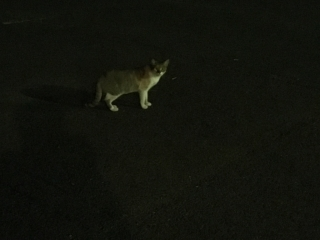 IMG_2556 地域猫
