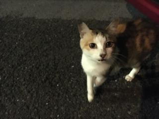 IMG_2553 地域猫