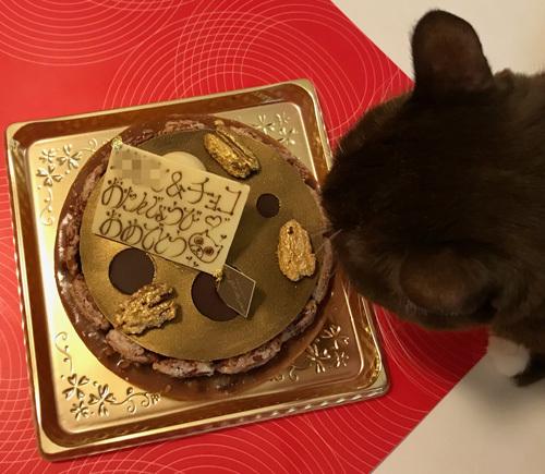 9月生まれの猫のお誕生会