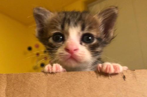 子猫とチョコの奇跡の瞬間の動画