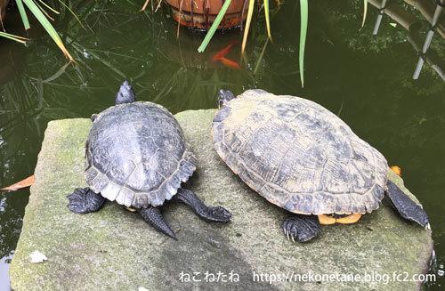葛原岡神社の亀さん