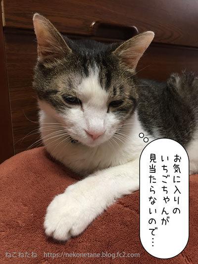 181002ichigochan121_20180930222925a7a.jpg