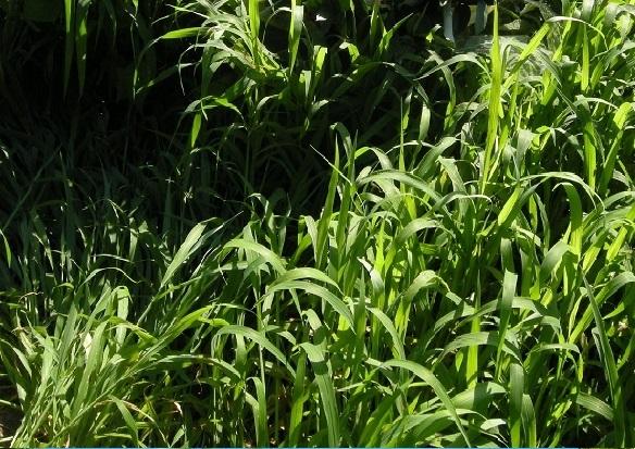 櫛引 夏草の光と陰