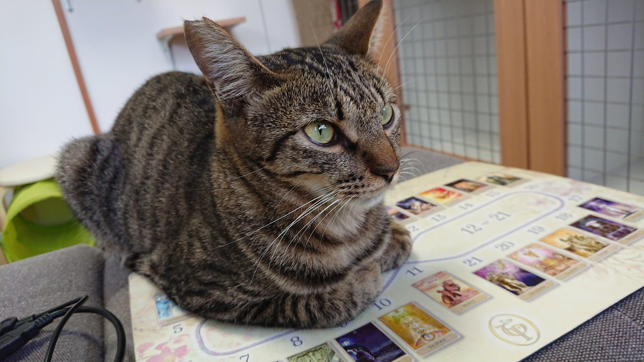 保護猫カフェたまゆらDEイベント開催☆