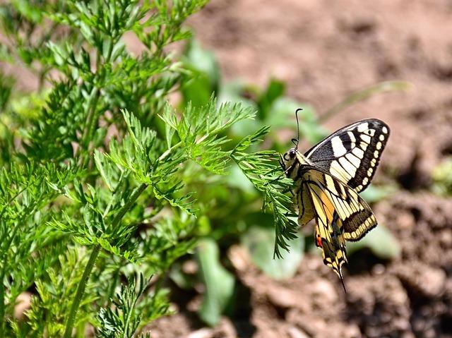 butterfly-2413468_640.jpg
