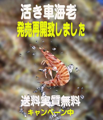 2017車海老 TOP画像 03