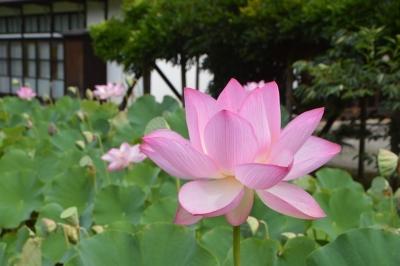 oyaku09.jpg