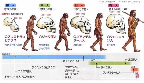 20180920 脳の進化