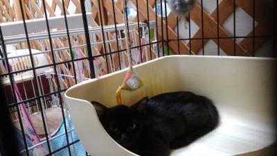 黒猫とわ(1)