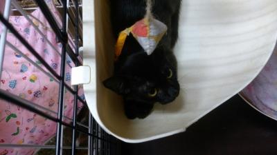 黒猫とわ(2)