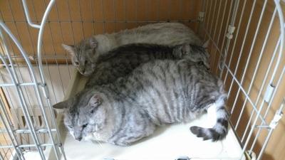 多頭崩壊の猫達