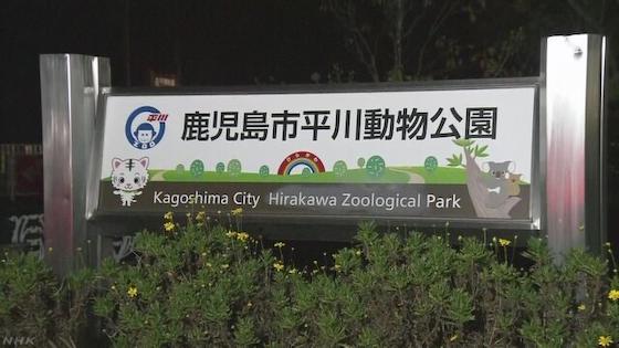 鹿児島市の平川動物公園で飼育員の男性がホワイトタイガーに襲われ亡くなる … 4頭のホワイトタイガーが飼育されていて当時1人で飼育作業にあたる