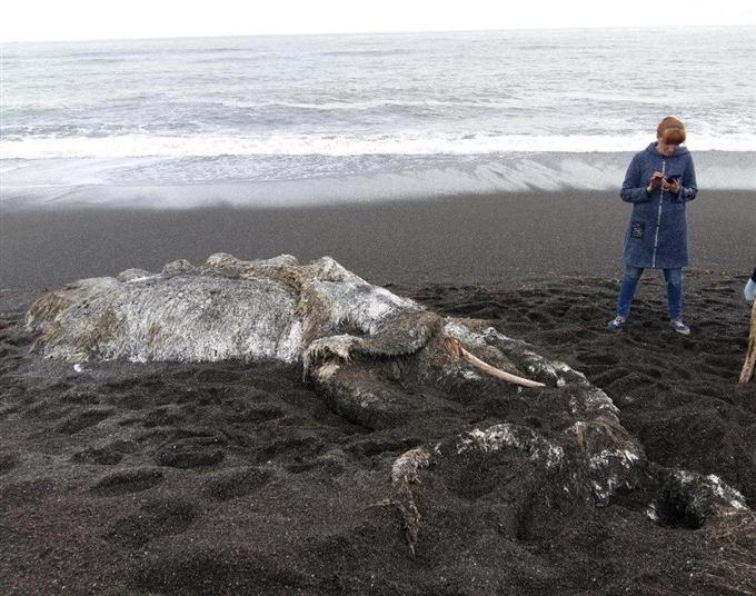 ロシア UMA マンモス クジラ セイウチ ニンゲン