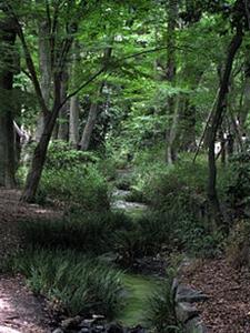 糺の森その2