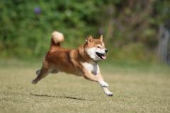 飛行犬 ダウンサイズ