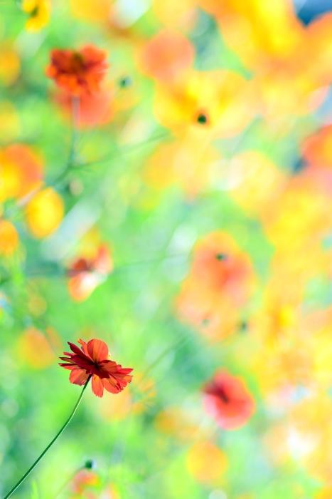 DSC_0308-002花