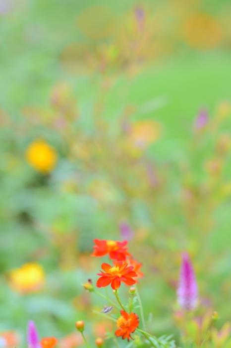 DSC_1807-001花