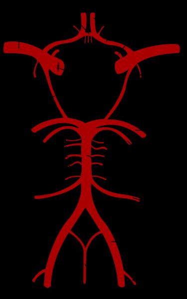脳動脈 (1)