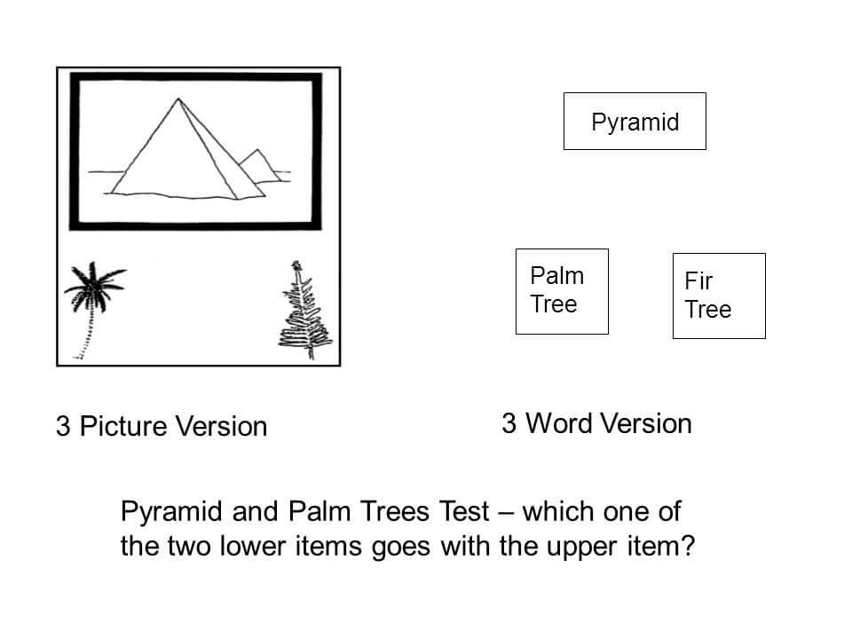 ピラミッド松の木テスト