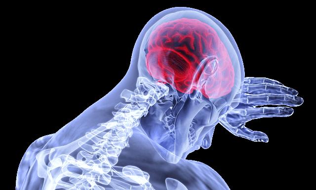 brain-3168269_640 (1)