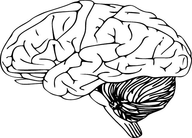 brain-312007_640.png