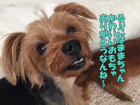 image1018081601.jpg