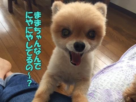 image118090301.jpg
