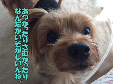 image118100301.jpg