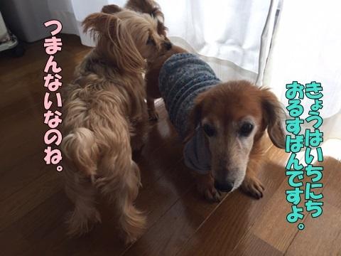 image1318100601.jpg