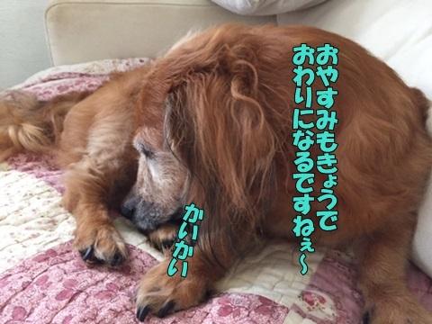 image218081401.jpg