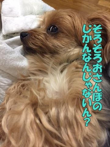 image218101101.jpg