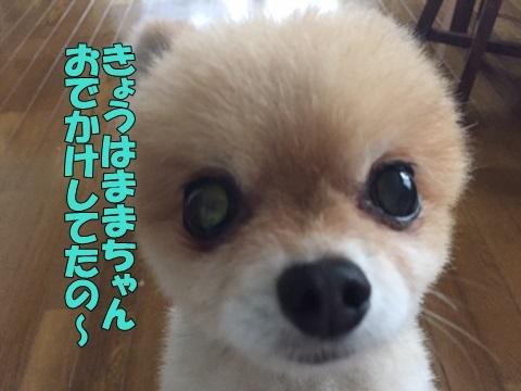 image318090201.jpg