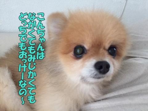 image41810080202.jpg