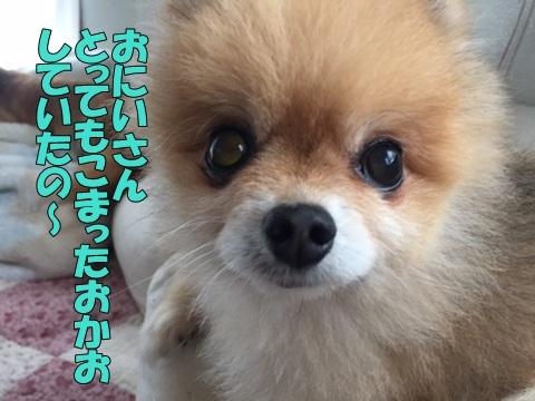 image418101101.jpg