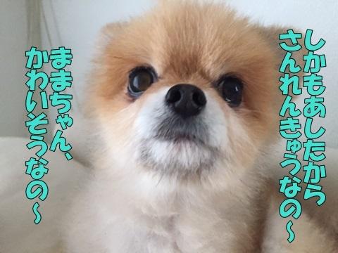 image518092101.jpg